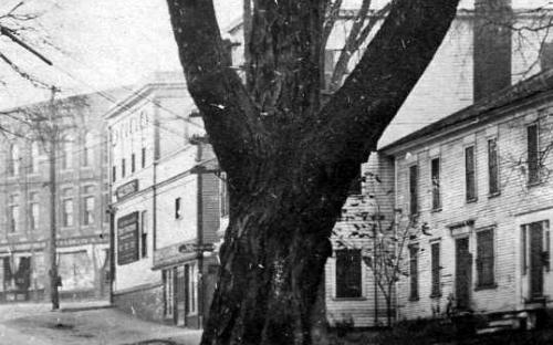 Imperial House behind tree with old Abbott house on left