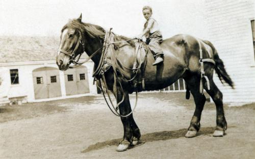 Work horse Gabriel with Loring Batchelder on top - 1932