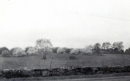 Homefield across the street from the farmhouse - 1940s