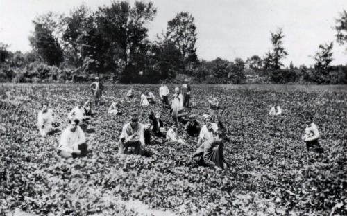 Picking season - Rennie Farm Argilla Rd.