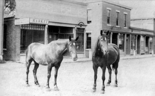 Two horses on Barnard St. circa 1891 - 1895