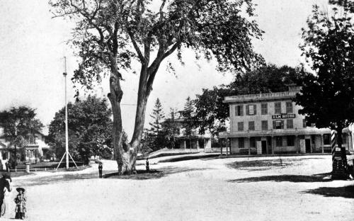 Elm Sq. 1870 - Elm tree, Elm House Hotel